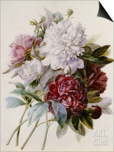 A Bouquet of Red, Pink and White Peonies SwitchArt™ Print by Pierre-Joseph Redouté at Art.com