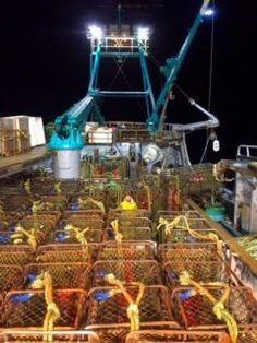Brown King crab Alaska Fishing, King, Brown, Brown Colors, Chocolates