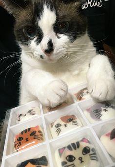 お菓子をどーぞ。