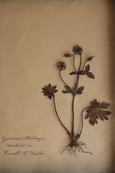Geranium thunbergii, Siebold ex Lindl et Paxton, iron, brass and water paint