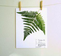 Fern Herbarium Specimen PRINT Pressed by DayThreeCreations on Etsy, $10.00