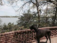 Edgewater Dog Walking