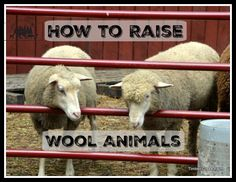 I raise wool animals for yarn.The beginning of any wool yarn starts with fiber harvested from wool animals producing animals.