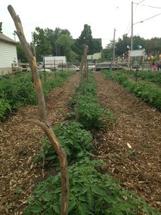 Pete's garden opening. A collaboration of Pete's Fruit Market, Farmer Cesar Cerna, UW Extension, Core El Centro, & the City of Milwaukee.