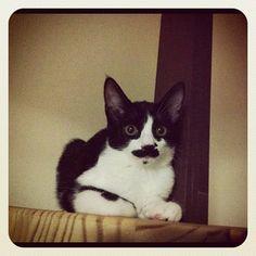 cat from #Nekostagram