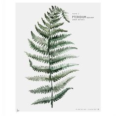 Affiche Urban botanic Pteridium 30x40 cm 40 euros