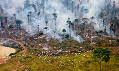 12 Stunning Photos that capture the impact of Overconsumption and Overpopulation