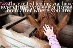 I always get very excited! Never as excited as when I see 'my' horse. Home is where 'my' horse is All The Pretty Horses, Beautiful Horses, Animals Beautiful, Adorable Animals, Beautiful Creatures, Equestrian Quotes, Equestrian Problems, Equestrian Style, Horse Girl Problems