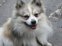 Hunde Foto: Tanja und Finn - In voller Pracht Hier Dein Bild hochladen: http://ichliebehunde.com/hund-des-tages  #hund #hunde #hundebild #hundebilder #dog #dogs #dogfun  #dogpic #dogpictures