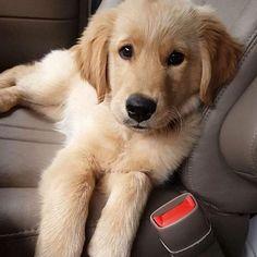 Hey cutie ❤#mydreamygolden