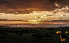 Доброе утро друзья . Рассвет в Масаи Мара. Жалко что фото, не может передать всю фееричность этого http://travelkenya.ru/nashi-programmy/safari/2-dnya-i-1-noch-v-nacionalnom-parke-masai-mara   {{AutoHashTags}}