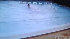 Swimming pool during an earthquake | Gif Finder – Find and Share funny animated gifs
