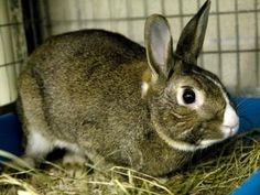 LEGO is an adoptable Bunny Rabbit Rabbit in Boston, MA.