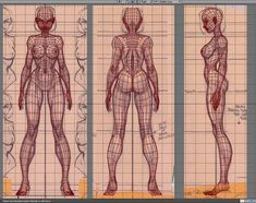 female body reference sheet - Google Search