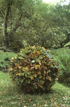 Andy Goldsworthy, Leaf sculpture, Green Home Outdoor Sculpture, Outdoor Art, Sculpture Art, Garden Sculpture, Metal Sculptures, Abstract Sculpture, Bronze Sculpture, Land Art, Andy Goldsworthy Art