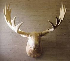 Paper Faux Animal Heads | Animal Heads | Design Loft :: The Design Blog of Barbour Spangle ...