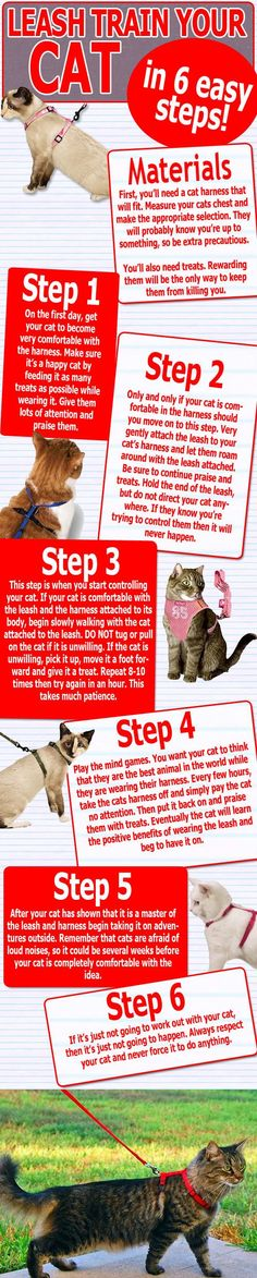 Step by step cat leash training. Cat Care Tips, Pet Care, Pet Tips, Crazy Cat Lady, Crazy Cats, I Love Cats, Cute Cats, Cat Magazine, Cat Leash