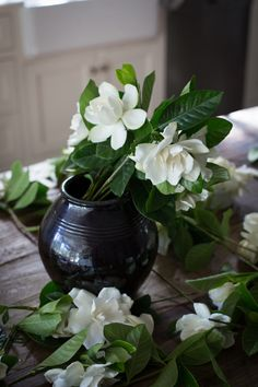 Gardenias gardenia f