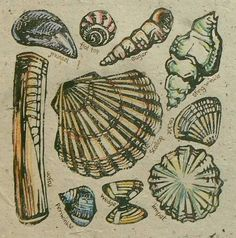 lino cut shells - Google Search