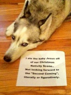 Dog Shaming features the most hilarious, most shameful, and never-before-seen doggie misdeeds. Join us by sharing in the shaming and laughing as Dog Shaming reminds us that unconditional love goes both ways. Funny Animal Pictures, Funny Photos, Funny Animals, Cute Animals, Dog Photos, Crazy Animals, Silly Pictures, Dog Pictures, Animals Beautiful