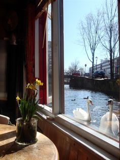 Great views of the canal (and swans!) at 1 Bedroom Houseboat in the heart of Amsterdam