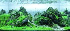 Japanese aquarium - Tìm với Google