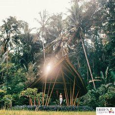Green Bali #lilithstravel #IleannaSimancas #travelblog #travel #womentraveler #blogger #blog #world #time #storyteller #style #lifestyle #photography #bussines #story #writer #creative #fly #walk #women #adventuretime #PhotoTakenFrom @balibuddies