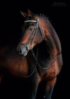 - Art Of Equitation Most Beautiful Horses, All The Pretty Horses, Animals Beautiful, Cute Horses, Horse Love, Horse Photos, Horse Pictures, Animals And Pets, Cute Animals
