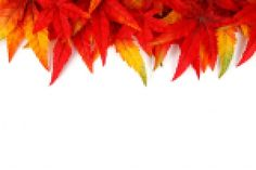 """Képtalálat a következőre: """"fall leaves png"""" Fall Leaves Png, Autumn Activities For Kids, Kid Activities, Fall Photos, Free Pictures, Free Stock Photos, Wordpress Theme, Fall Decor, Abstract"""