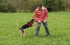 Dog trainer Alberto and Niño play ball! / Educatore Alberto Castello e Niño giocano!