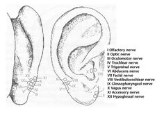 ear acupressure points   What is Auricular Acupuncture? - Shuswap Acupuncture Clinic & Laser ...