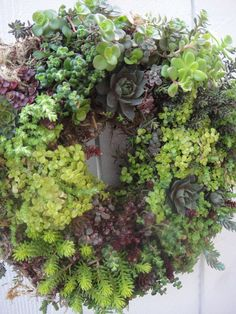 Succulent Wreath Living Wreath Hand Crafted by donnahubbard, $55.00