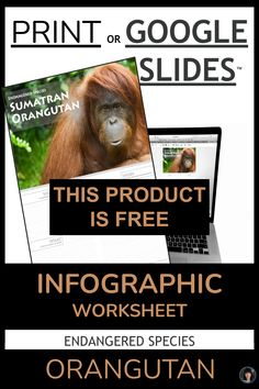 SAVE THE ORANGUTAN | ENDANGERED SPECIES | PRINT OR GOOGLE SLIDES INFOGRAPHIC for Middle School, High School, College, or University students. NO PREP - PRINT AND GO OR GO INTERACTIVE WITH THE GOOGLE LINK ⚫ TWO INFOGRAPHIC WORKSHEETS as PDFs to be printed or uploaded. 11 x 17 inches is the recommended printing size. There is one color and one black and white. ⚫ Link to my INFOGRAPHIC WORKSHEET for students to use interactively CLICK TO SEE MORE Fun Fall Activities, Learning Activities, Teaching Resources, Teaching Ideas, Teaching Language Arts, Teaching English, Save The Orangutans, Google Link, High School Literature
