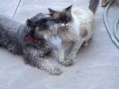 Kitty-Puppy Love