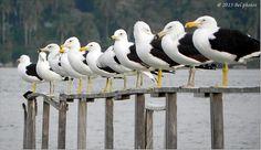 Série: Aves...