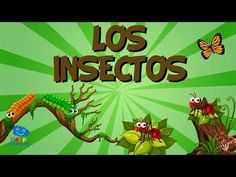 Animales Invertebrados   Videos Educativos para Niños - YouTube Preschool Rooms, Preschool At Home, Preschool Science, Types Of Insects, Bugs And Insects, Queen Ant, Animal Classification, Insect Crafts, Science Programs