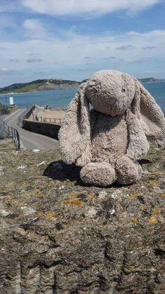 jellycat bunny found in Lyme Regis  #lostteddy #lostbunny #lymeregis contact: https://www.facebook.com/AlicesBearShop/photos/a.239835029459241.48960.219990704777007/578122795630461/?type=1