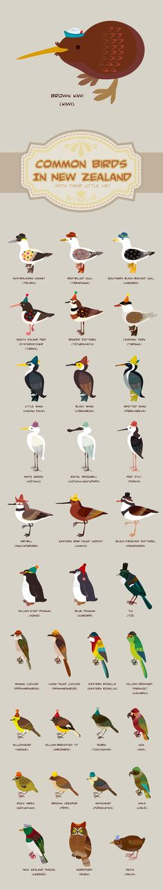 New Zealand Birds and Their Hats by gracekate.pixnet #Illustration #Birds #New_Zealand