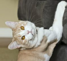 Seu gato arranha móveis?