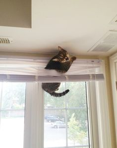 The cat whose love/hate relationship with your blinds will be his undoing. | 24 Cats Who Realize They've Made A Huge Mistake