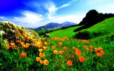 Nature National Park with Flowers - Bing images Mount Rainier National Park, Grand Teton National Park, Rocky Mountain National Park, National Parks, Adventure Holiday, Adventure Tours, Best Nature Images, Valley Of Flowers, Death Valley National Park