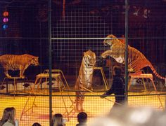 Grants awarded to animal circuses in Ireland fall by nearly ninety per cent since launch of Stop Circus Suffering Ireland  But there's still work to be done PLEASE VISIT SITE TO TAKE ACTION