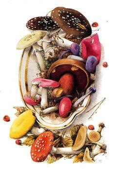 mushroom art by Marjolein Bastin Botanical Illustration, Botanical Art, Illustration Art, Mushroom Art, Mushroom Fungi, Anne Geddes, Marjolein Bastin, Nature Sketch, Nature Artists