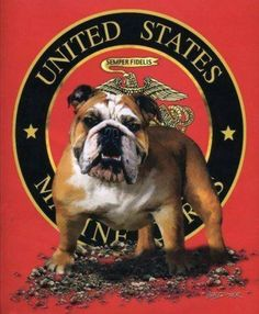 Image result for the original pit bull DEVIL DOG MARINE
