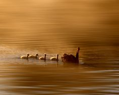 Duck family by jong beom kim on 500px