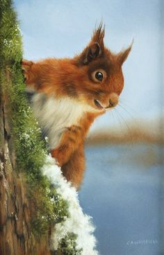 Carl Andrew Whitfield (b.1958) 'A Red Squirrel on a tree