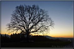 Plainlinde und Sonnenuntergang