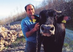 Four Endangered Italian Cow Breeds You Should Know About - Cheese 2017 Cheese Making Supplies, Milk And Cheese, Artisan Cheese, Cheese Cloth, How To Make Cheese, Goats, Cow, The Incredibles, Cattle