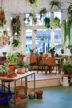 Wildernis, Amsterdam, plants, Urban Jungle Bloggers, plant shopping, shopping tip Amsterdam