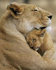mother and cub <3